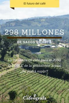 Vineyard, Blog, Outdoor, Coffee Sacks, Coffee Store, Haciendas, Future Tense, Outdoors, Vine Yard
