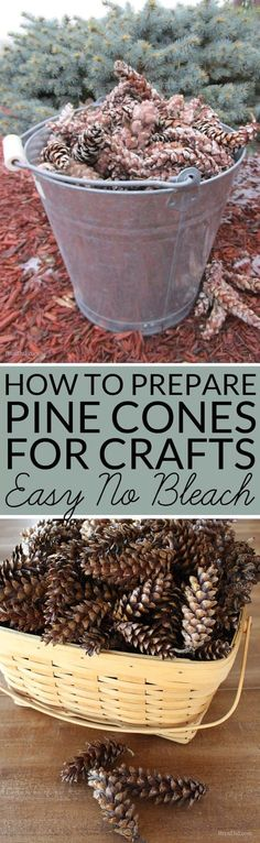 Pine cones collected outdoors can bring mold, mildew or bugs into your home unless they are correctly prepared for indoor use. Learn how to prepare pine cones for crafts. No bleach. All-natural. (outdoor fall crafts for kids) Pine Cone Art, Pine Cone Crafts, Christmas Projects, Fall Crafts, Crafts To Sell, Holiday Crafts, Crafts For Kids, Diy Crafts, Kids Diy