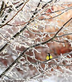 ...on a frozen branch