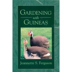 Gardening with Guineas: A Step-By Step Guide to Raising Guinea Fowl on a Small Scale    I hope it tells me how to KEEP the flighty little buggers IN the garden