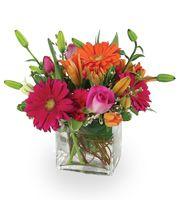 Bright and Cheery by Frank Gallo Florist, Albany NY florist