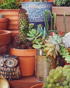 Mother of crasas: imágenes de suculentas y entrevista | Plantas