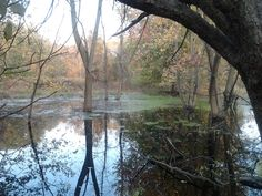 lagoon. Chagrin River Park--Willoughby, OH.