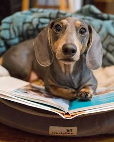 Just let me look that up. Dachshund, cute dog
