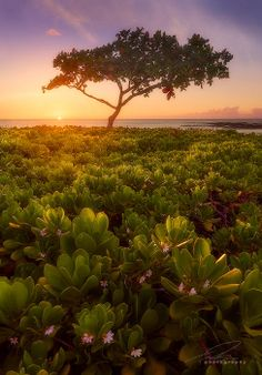 Lani's Lost Love, Big Island of Hawaii - Photo by Ted Gore, 500px