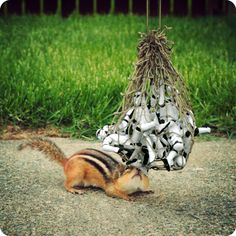 this guy is a friggin genius. like how the hell can you befriend a chipmunk. he even explains what he did!