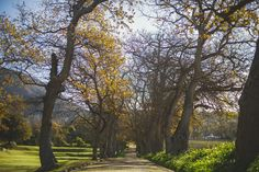 Visit The Last Word Franschhoek Luxury hotel today! Explore the beautiful the secretive sanctuary in the heart of this famous French heritage village. Famous French, Explore, Words, Gallery, Instagram Posts, Nature, Plants, Beautiful, Naturaleza