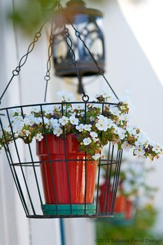 hanging baskets in my balcony