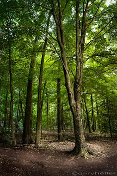 The Woods Nature Photography Trees by garyhellerphotograph on Etsy, $29.00
