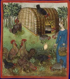 Femme donnant à manger à ses poules Ibn Butlân, Tacuinum sanitatis Rhénanie, 3e quart du XVe siècle Paris, BNF, département des Manuscrits, Latin 9333, fol. 63
