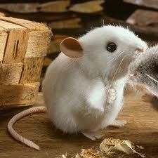 I like the shape. Wonder if I could adapt the white rat pattern easily to this body type?