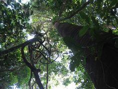 Come and check out the brand new Corcovado National Park El Tigre trail in Dos Brazos de Rio Tigre.
