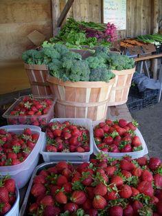 redwood roots farm Dream'n about the abundance