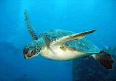 relax in Hurghada Day Tours and Excursions to enjoy Diving Tours in Hurghada, During your Hurghada Excursions you St Lucia Caribbean, Day Tours, Phuket, Diving, Places To Travel, Saints, Image, Saint Lucia, Pavilion