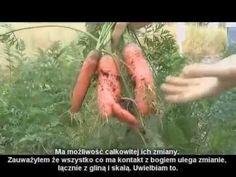 Nauka metody - Back To Eden część 3 - [PL] Zrębki, Plony, Gleba - Upraw. Youtube, Youtubers, Youtube Movies