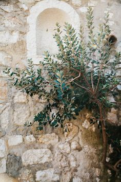 Olive tree 8x12 - Fine Art Photography Provence French photos Wall Decor Office Art France Travel photo Photography Decoration