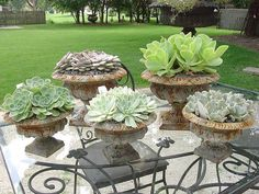Love these succulent's in rusty urns.