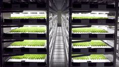 Vertical Farms: Wrong on So Many Levels Aquaponics System, Aquaponics Supplies, Hydroponic Farming, Aquaponics Diy, Indoor Farming, Home Depot, Cool Things To Make, Things To Come, Las Vegas