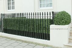 Artificial Hedge made with naturalised Artificial Boxwood Foliage with matching Artificial Boxwood Domes