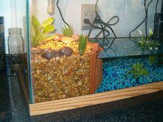 Turtle tank | The basking area | Dana Lane | Flickr Aquatic Turtle Habitat, Aquatic Turtle Tank, Turtle Aquarium, Aquatic Turtles, Turtle Basking Area, Turtle Basking Platform, Turtle Terrarium, Aquarium Terrarium, Terrarium Ideas