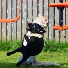 犬を攻撃する猫