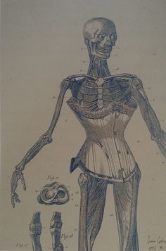 McQueen created his own 'museum of woman-monsters' in his second couture collection fro Givenchy, Eclect Dissect, shown in July 1997. In the period leading up to to the show, his art director SImon Costin combined the late Victorian costumes McQueen was then looking at with with a series of animated skeletons and muscle men from the sixteenth-century anatomical plates of Andreas Vesalius in a series of collages