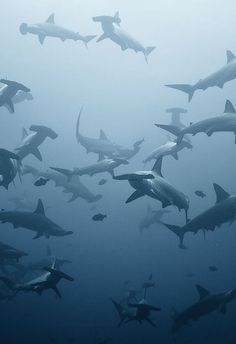 Amazing underwater photographs of sharks and dolphins by Alexander Safonov