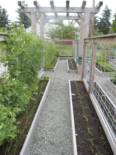 Raised garden beds inside two five-foot high fences that keep the deer out - follow link to read the original article and see more photos!