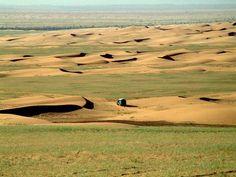 Mauritania Tagant Tidjikja    Descente vers l'oued Khatt, une année verte (2005)