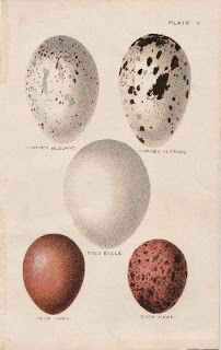 Brown & White Speckled Eggs - The Graphics Fairy