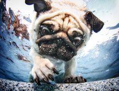 Occhi spalancati e boccacce sott'acqua: i cuccioli diventano mostri