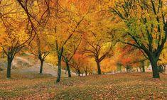 Autumn in Nagar khas.