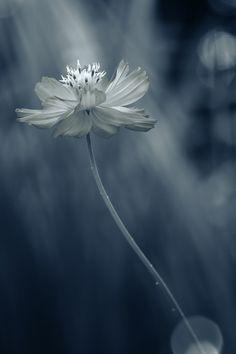 Every flower is a soul blossoming in nature.  ~ Gerard De Nerval