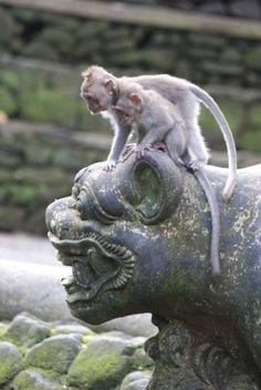 Indonesia – Monkey forest and sacred temple in Ubud   Luca Serradura
