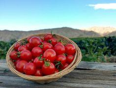 Tomatoes: Cherry (/lb)