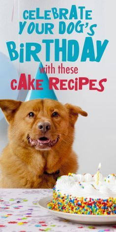 Why not make your dog's birthday extra-special with one of these homemade doggie…