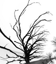 Baum - Impressionen 1