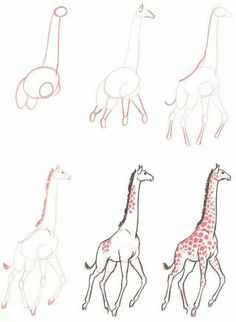 Learn to draw: Giraffe. How to draw a cute Giraffe step by step ♥ very simple tutorial Drawing Lessons, Drawing Techniques, Drawing Tips, Drawing Sketches, Painting & Drawing, Sketching, Drawing Ideas, Animal Sketches, Animal Drawings