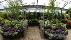 Gardening inspiration, plants, Mid Ulster Garden Centre