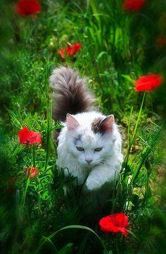 のんびりとするには、お花の中が最高よ