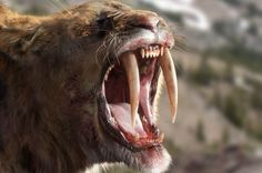 """Saber-toothed cat from """"Ice Age Giants""""."""