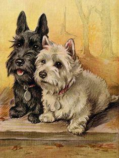 Scottish Terrier and Westie Terrier Scottie Dog Print | eBay