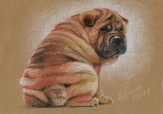 Щенок шарпея / Shar pei Puppy   |  Рисунок карандашом / color pencil painting  | Художник Евгений Гордейко / painter Eugene Gordeyko