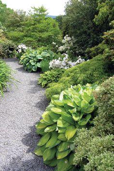 The Dingle garden at Welshpool, Wales, UK. >> I do love Hostas!
