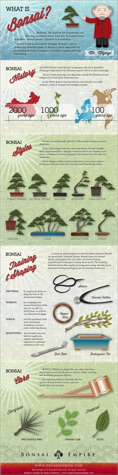 What is Bonsai? Holy crap I JUST had to do a project on bonsai trees the other day!
