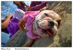 #Bulldog enjoying the nature