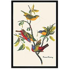John James Audubon 'Painted Bunting' Framed Print Art - Overstock™ Shopping - Top Rated Canvas