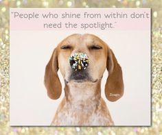 #animals #shine #dogs