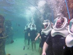 Sea Venture at Discovery Cove. Orlando Parks, Orlando Travel, Orlando Florida, Florida Vacation, Florida Travel, Disney Vacations, Dream Vacations, Solo Travel, Travel Usa