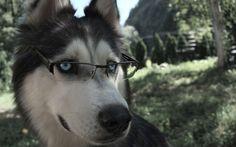 Top 5 des chiens les plus intelligents